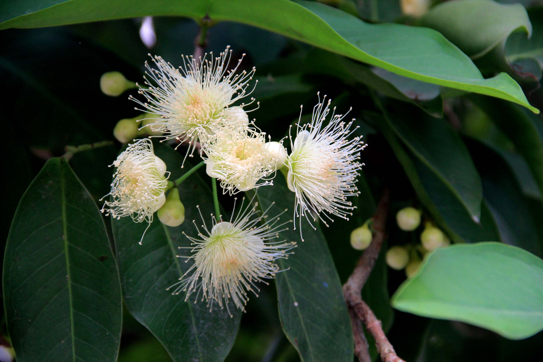 海南热带花卉(五)