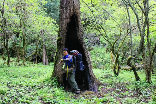 汶川阿尔沟,绿野仙踪,魔幻森林之旅