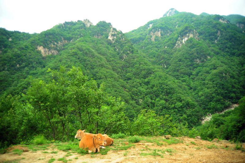 南阳石佛寺风景