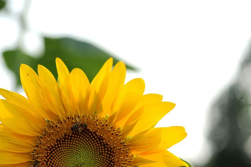 69 【光影中国】 69 小品微距 69 花卉草木 69 向阳花