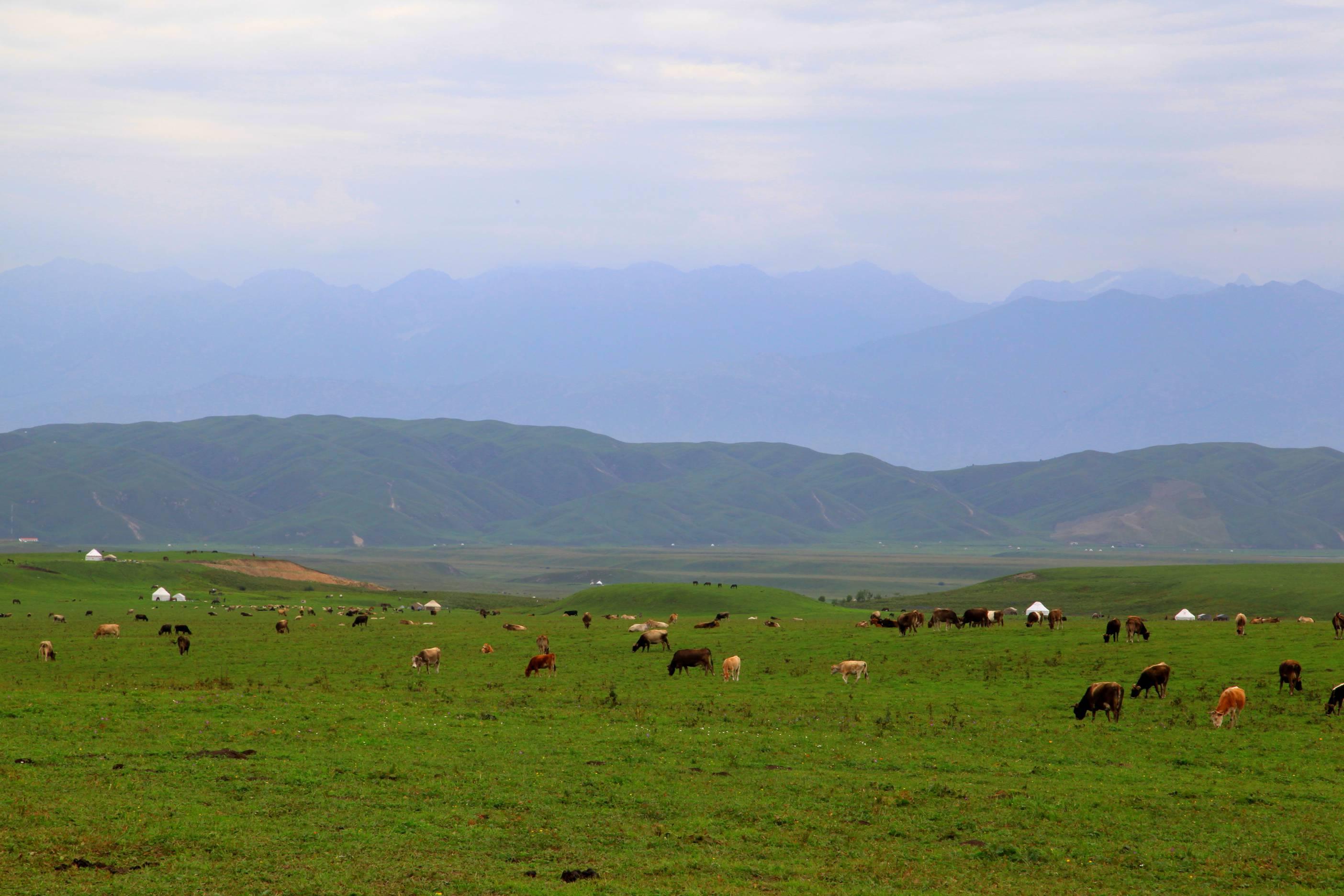 那拉提景区,位于新疆新源县境内,地处天山腹地,在被誉为塞外江南的伊犁河谷东端,有人间天堂之美称。 大漠中,这个曾被成吉思汗二太子察合台西征时命名的最先见到太阳的地方----那拉提(蒙古语)犹如一块镶嵌在黄绸缎上的翡翠,格外耀眼。这里山峦起伏,绿草如茵,既有草原的辽阔,又有溪水的柔美。既有群山的俊秀,又有松林如涛的气势。她以特有原始自然风貌,向世人展示天山深处一道宛如立体画卷般的风景长廊。这里居住全国十分之一的以热情好客、能歌善舞而著称的天山儿女哈萨克族,至今仍保留着浓郁古朴的民俗风情和丰富的