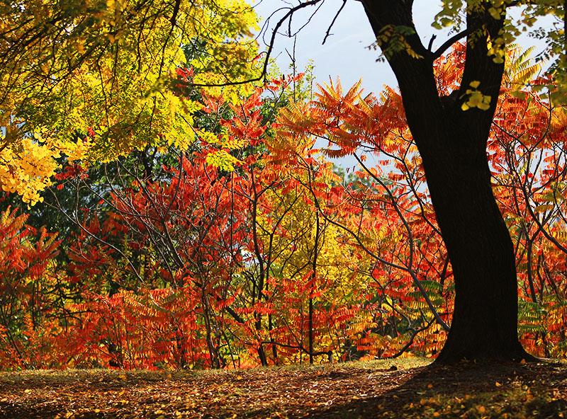 秋天真的来了秋天真美好剪贴画 秋天真美好1; 秋天来了-卧龙论坛-36行