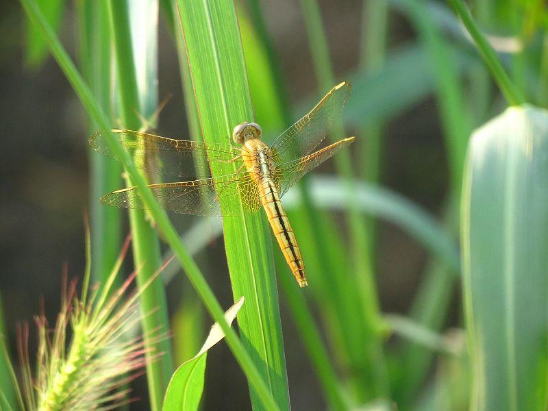 【高清】手工制作蜻蜓过程:手工制作蜻蜓过程在线观看