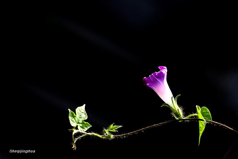 长向深秋结此花 花卉草木 36行南阳社区 36.01ny.cn -长向深秋结此花