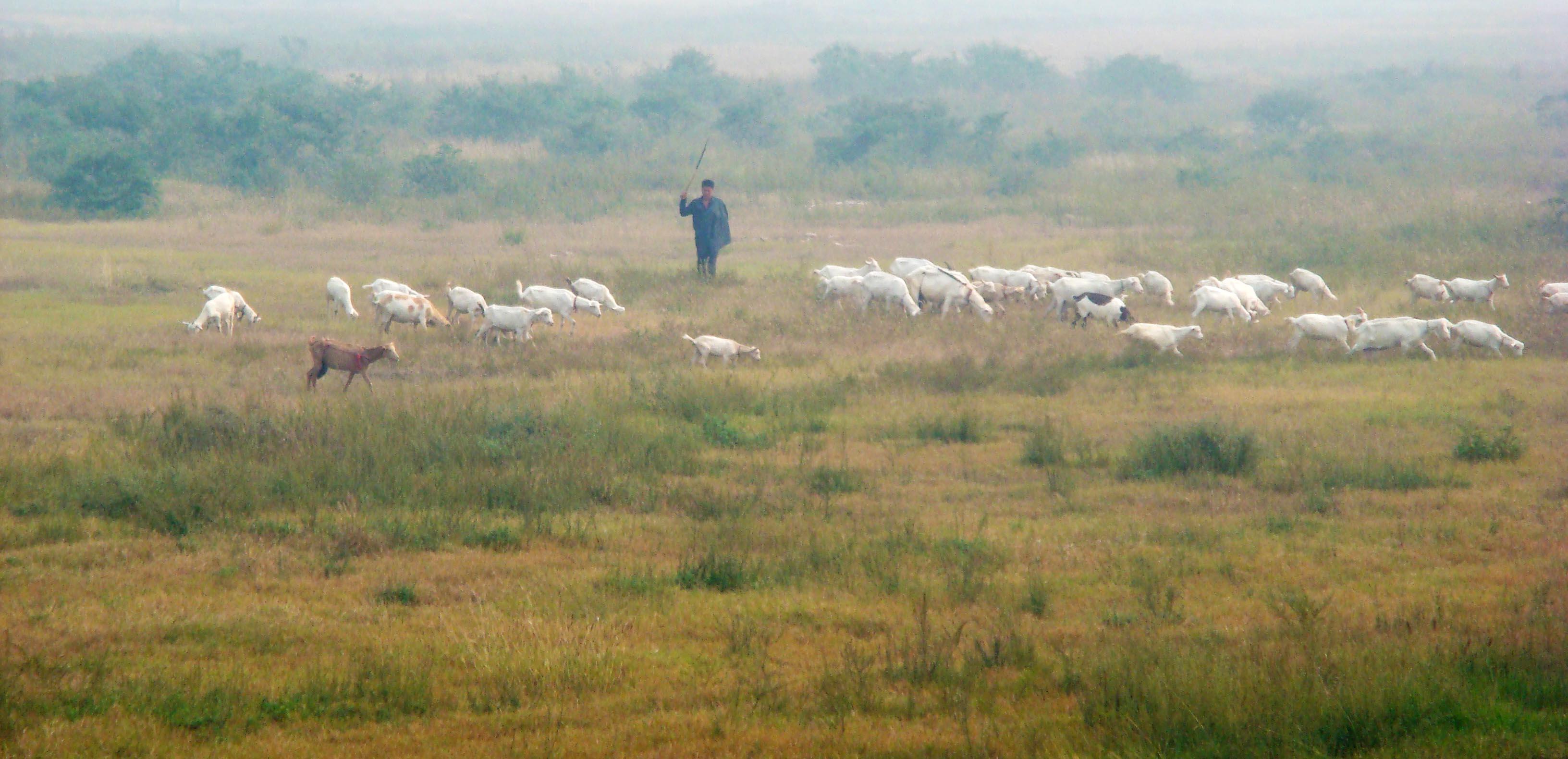 牧羊上的家的谱子