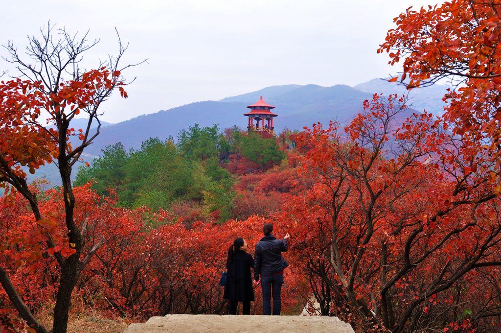 红叶风景头像图片大全