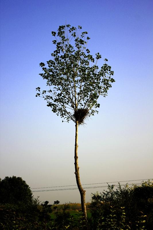 树上有个老鸹窝-万里骑行部-36行南阳社区-36.01ny.cn -