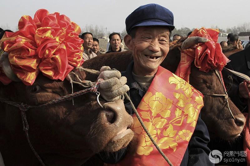 2010年11月15日,河南省郏县第六届红牛节上,一位红牛饲养员和他饲养的红牛正准备参加选美。.jpg