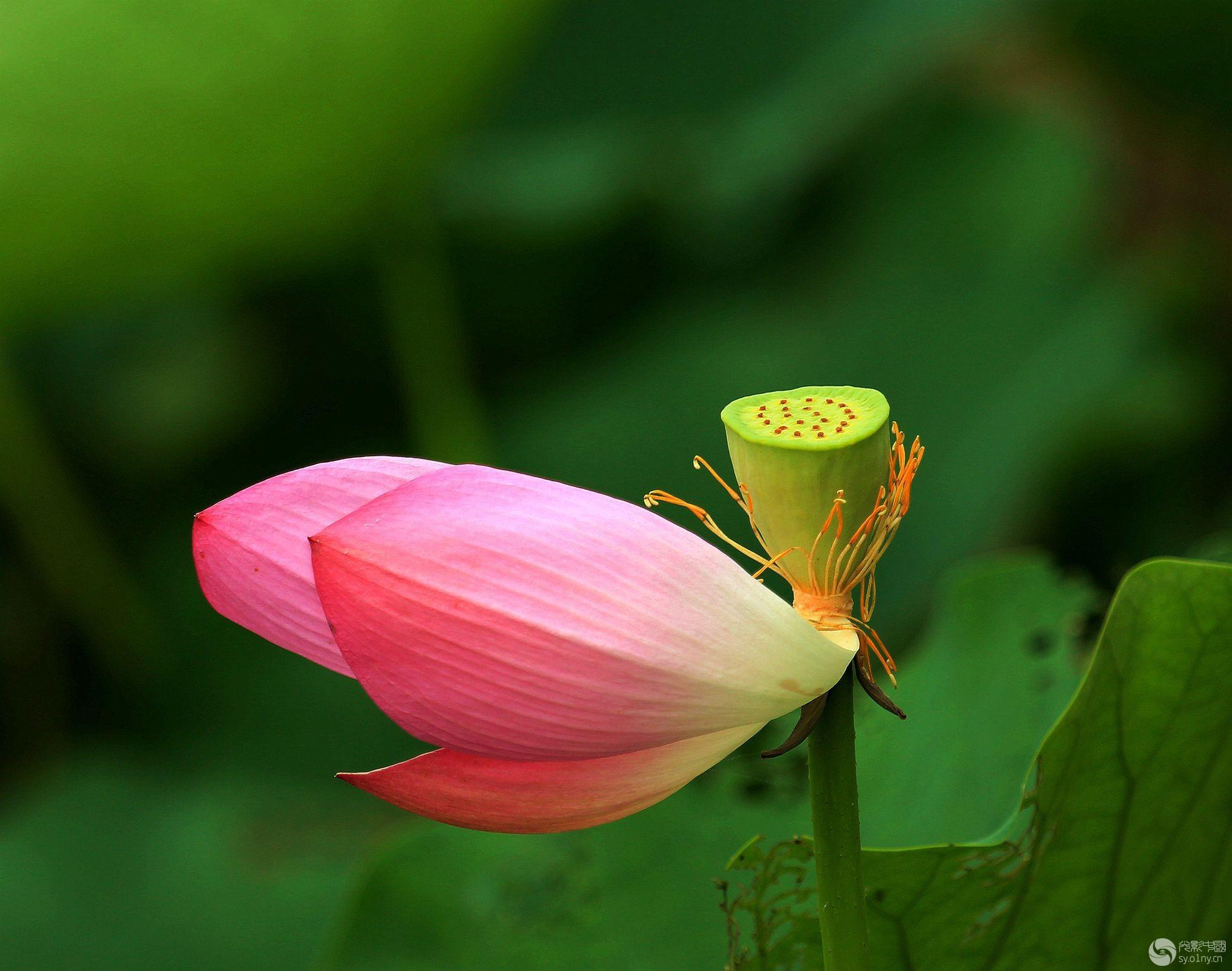 化蝶箶鹭丝独奏曲谱