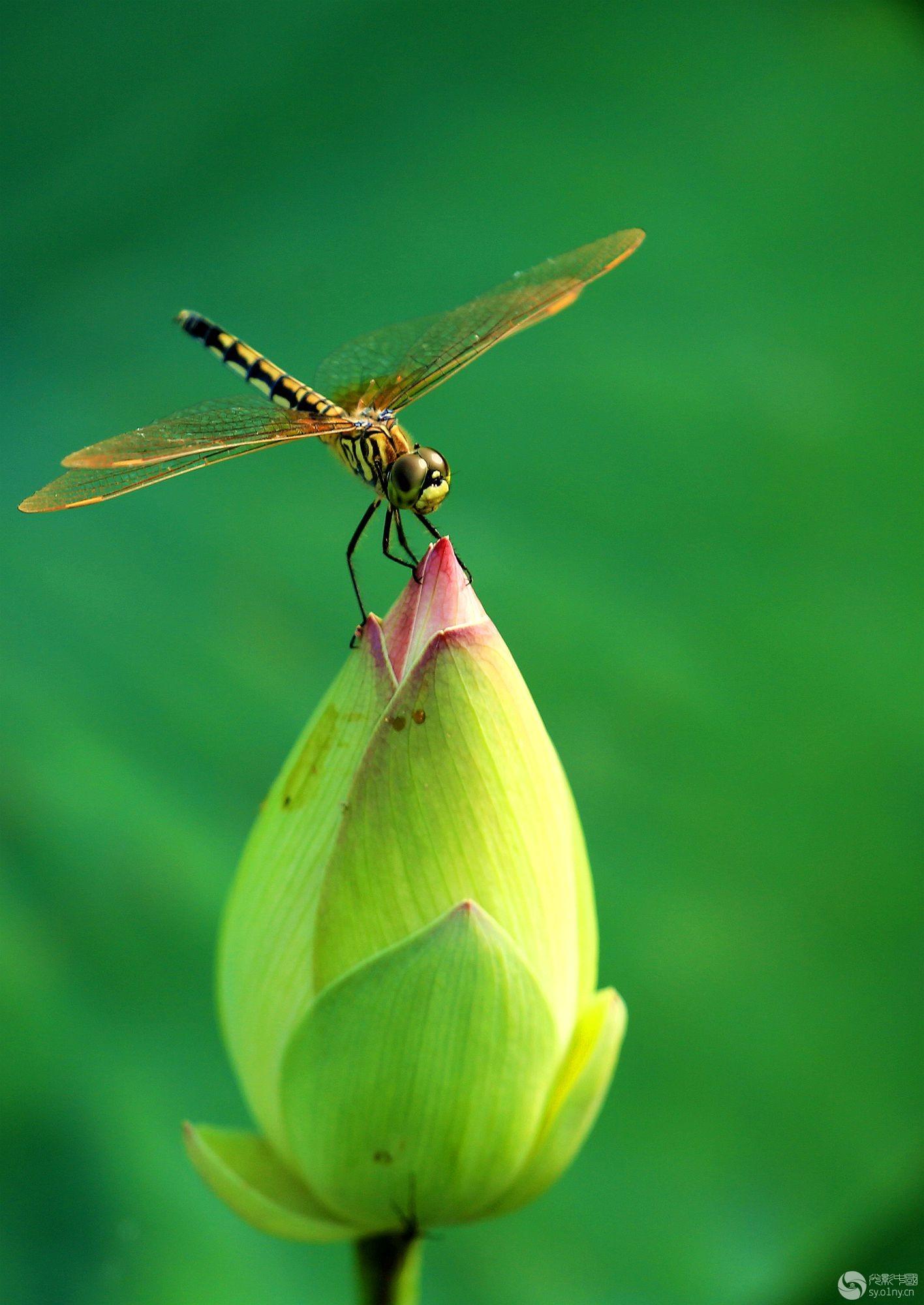 手工编织棉鞋蜻蜓图案大全
