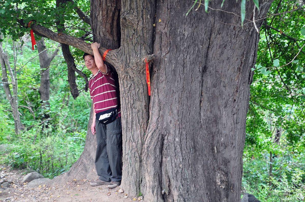 西峡二郎坪银树沟生态旅游风景区休闲散心游玩