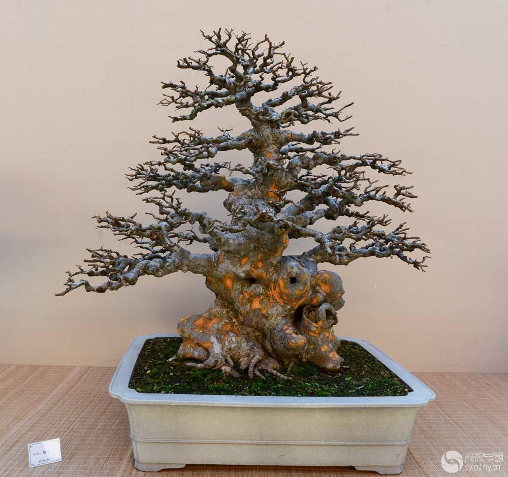 现代新中式盆栽