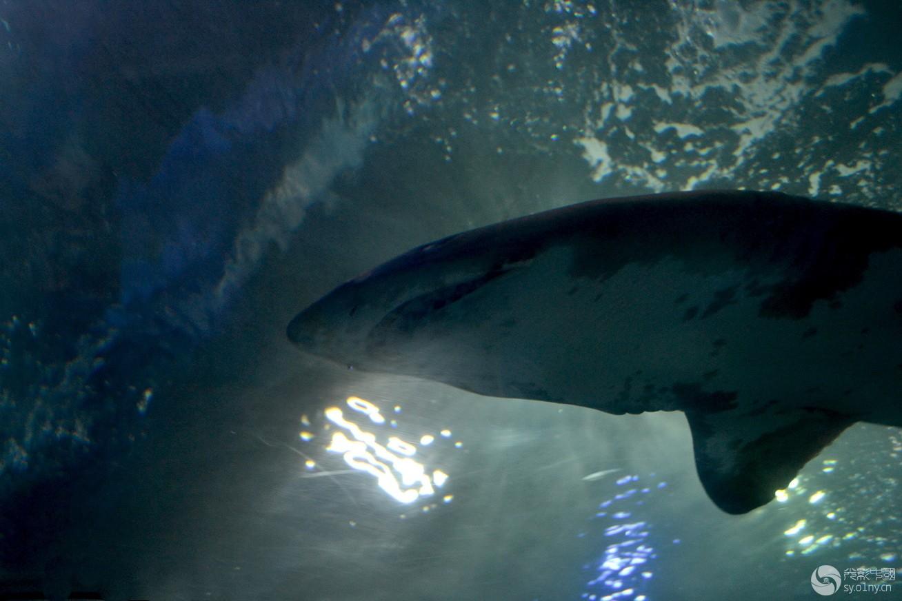 壁纸 动物 海底 海底世界 海洋馆 水族馆 鱼 鱼类 1308_872