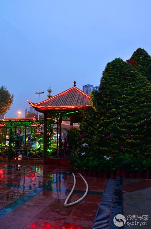 武汉青山公园菊花展 高清图片