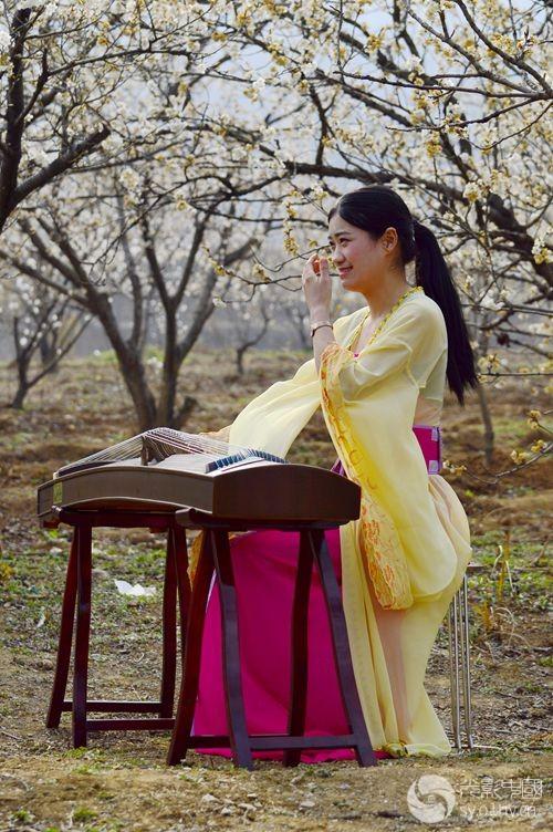 樱花丛中古筝声视频王小二花絮图片