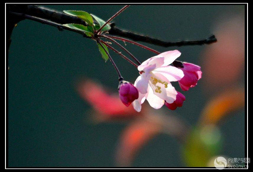 春花图领红包表情包名图片