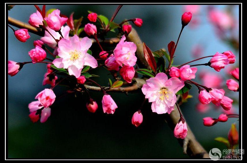 春花图表情九宫格创意图片包图片