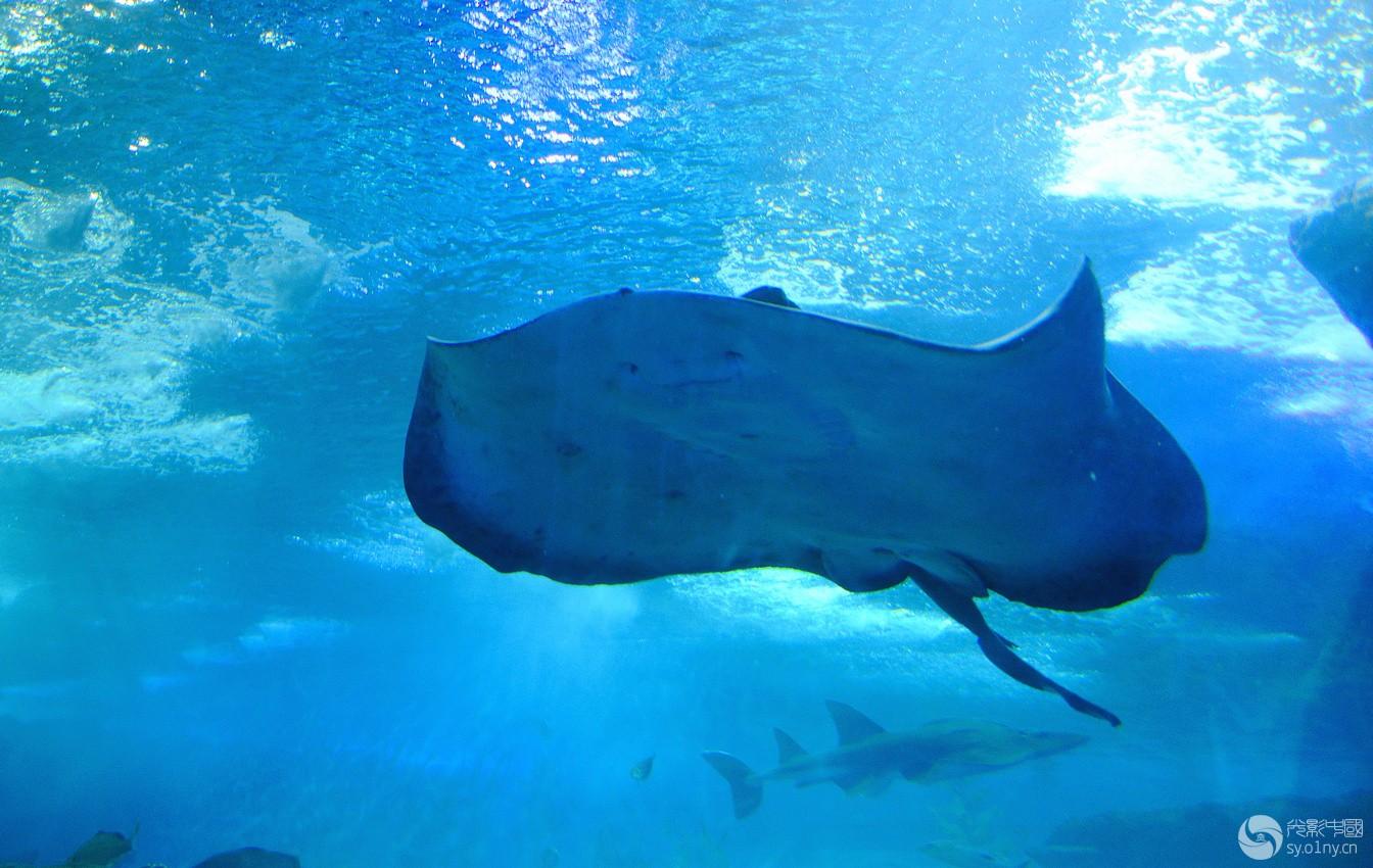 壁纸 海底 海底世界 海洋馆 水族馆 桌面 1344_850