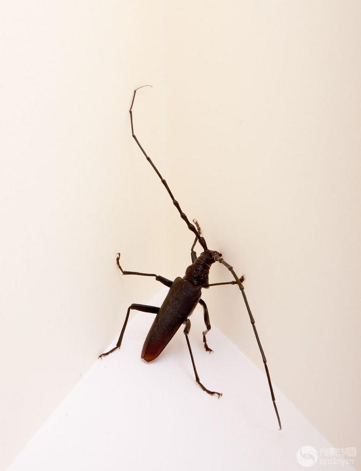 简单有趣动物世界 不一样的昆虫微距创意(下)
