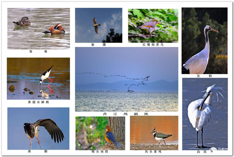 1293丹江湿地珍稀鸟类(2).jpg