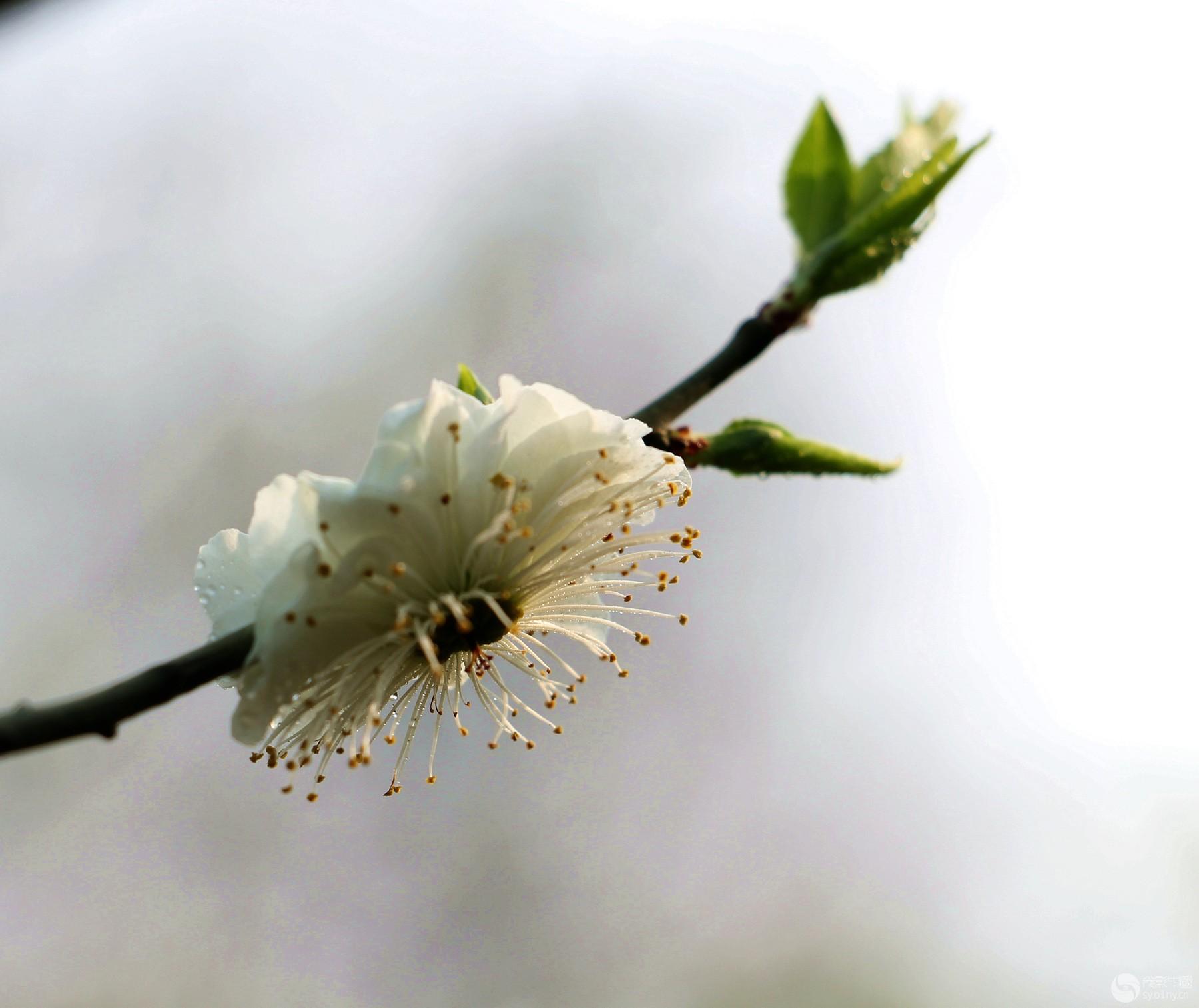 花卉草木4