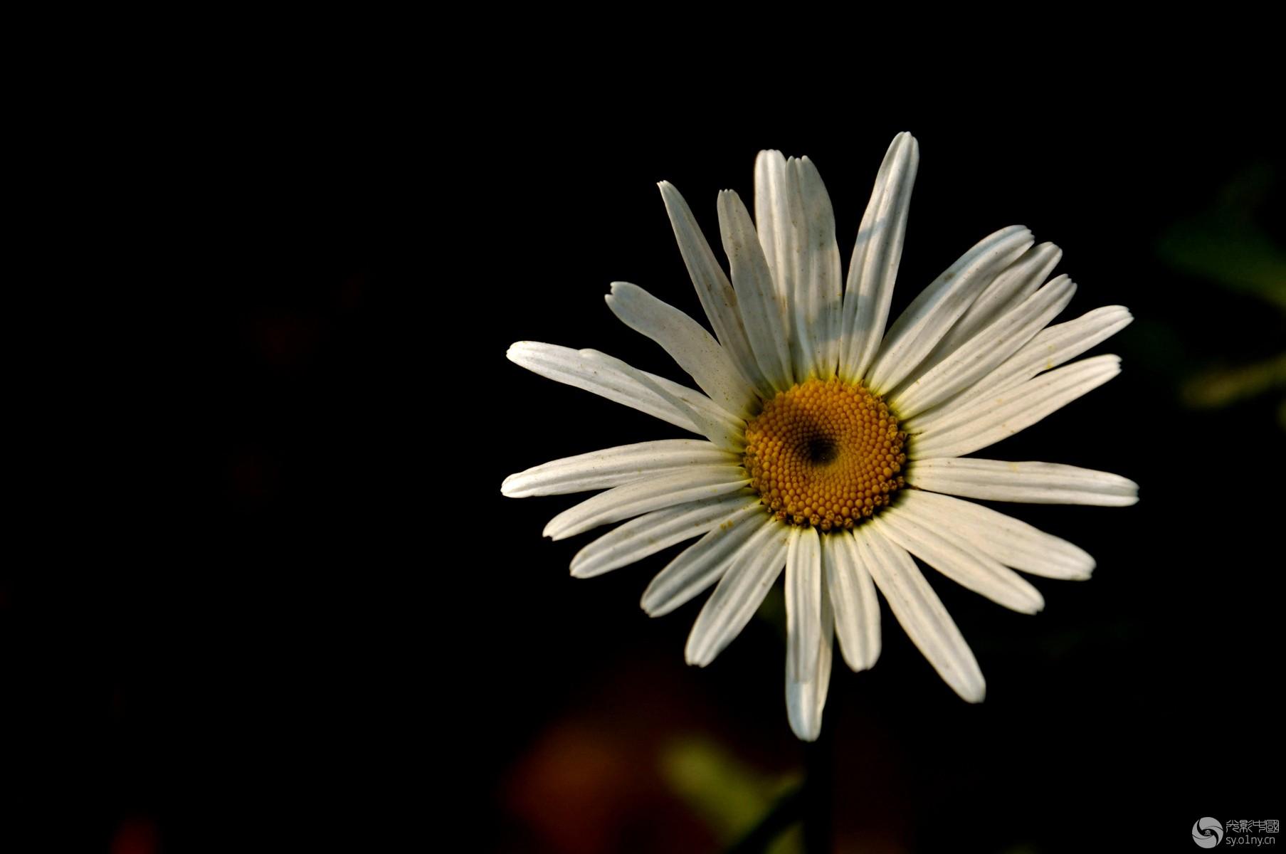 漂亮的花儿,叫不上名字 花卉草木 36行南阳社区 36.01ny.cn 光影中国