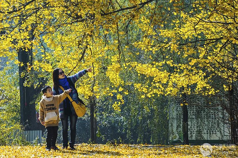 《金色之秋》获二等奖 网名:丹水 实名:王洪连.jpg