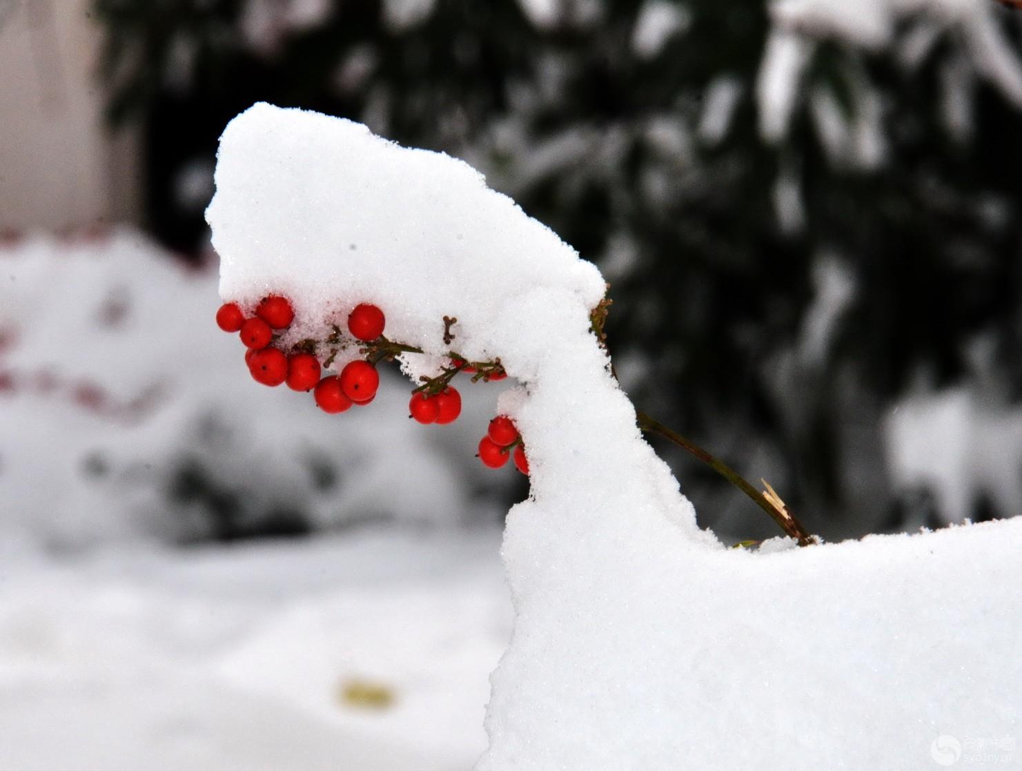 雪造艺术.jpg