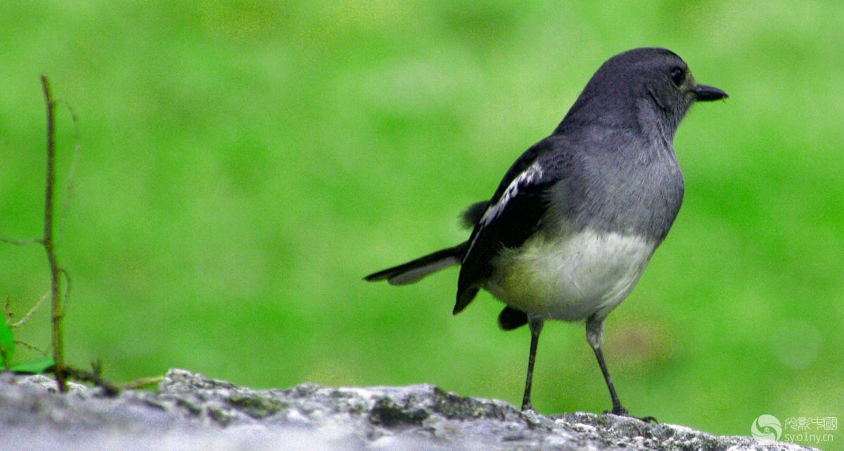 鸟.jpg
