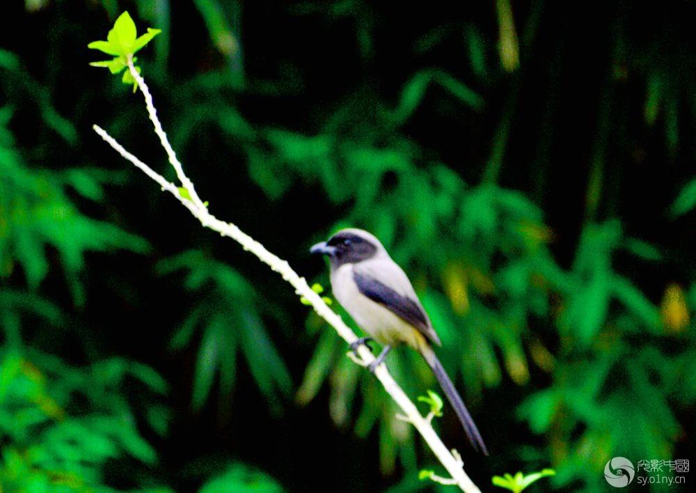 鸟2.jpg