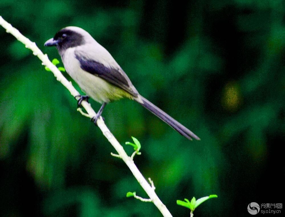 鸟6.jpg