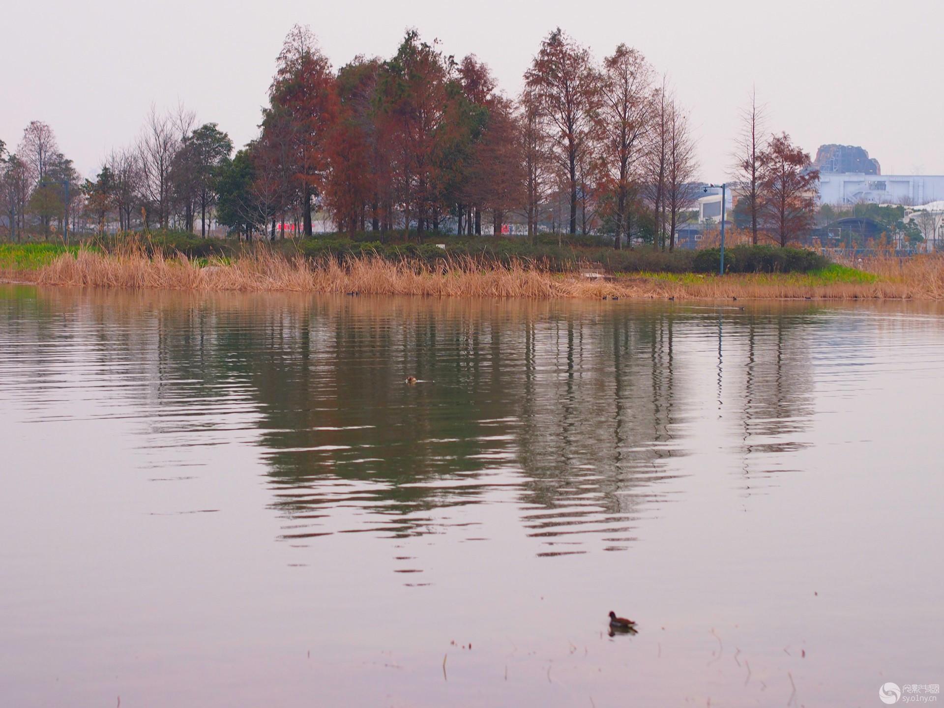 星愿公园秋色.jpg
