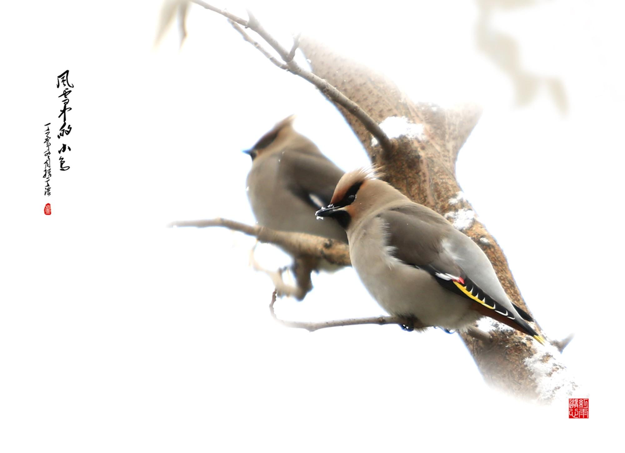 风雪中的小鸟.jpg