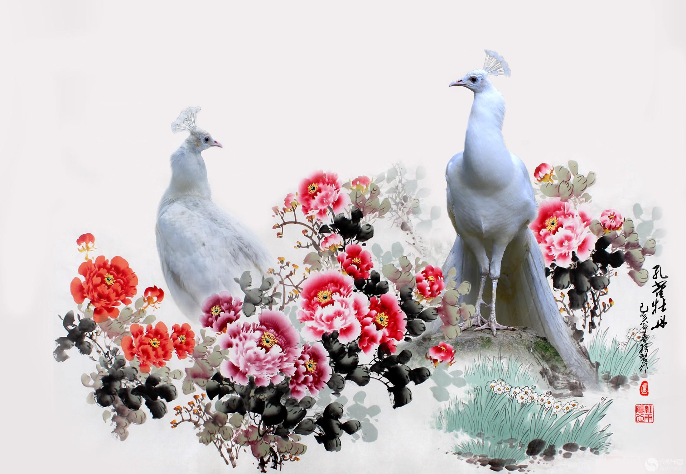 孔雀牡丹2.jpg