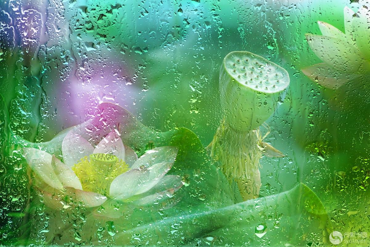 雨荷222_1.jpg