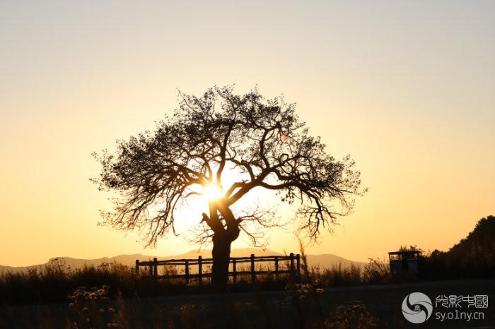 张家凹夕阳