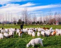 《喜羊羊》
