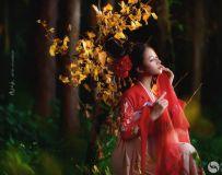 我只是在等一個秋天,斑斕的陽光灑在葉子上