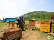 山里的养蜂人