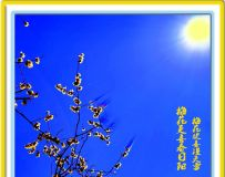 梅花更喜春日阳
