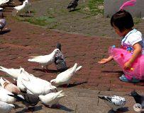 鸽子窝公园随拍