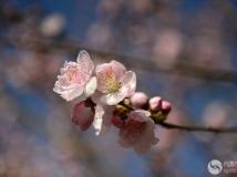 """2014第三期月赛""""春意""""《惜春》"""