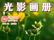 """光影中国网""""2014年生态微距摄影""""作品展(电子画册第215期)"""
