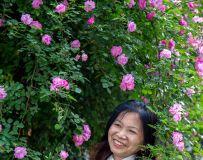 蔷薇人像习拍4