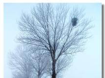 雪雾弥漫北原州