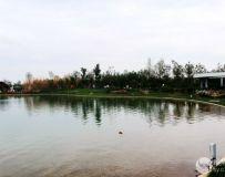 南阳世界月季大观园采撷(30)——东湖