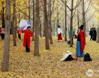 金秋北京奥森公园  红枫银杏彩叶飘飘(44)