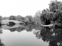 素面大明湖