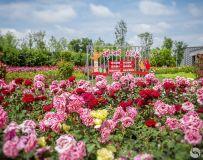 《花团锦簇》组照4幅