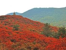 水源地杯2013第10期月赛 《红叶红满山》